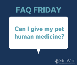 Can I give my pet human medicine_