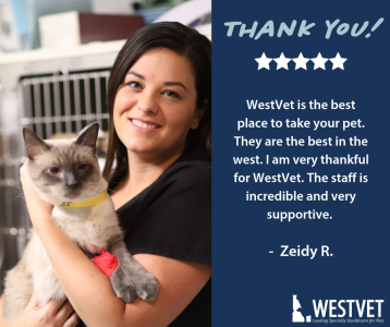 five star review_westvet boise idaho