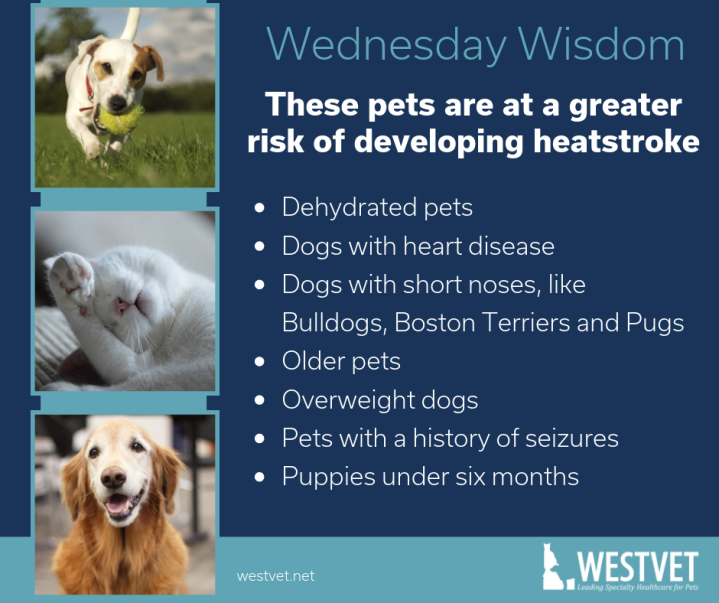 greater risk of developing heatstroke_westvet boise
