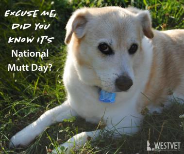 national mutt day_westvet