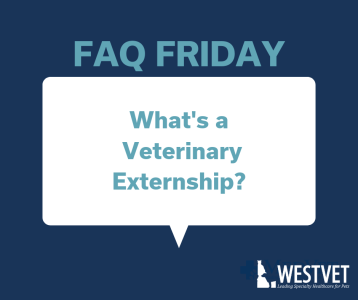 What's a Veterinary Extern_ (2)