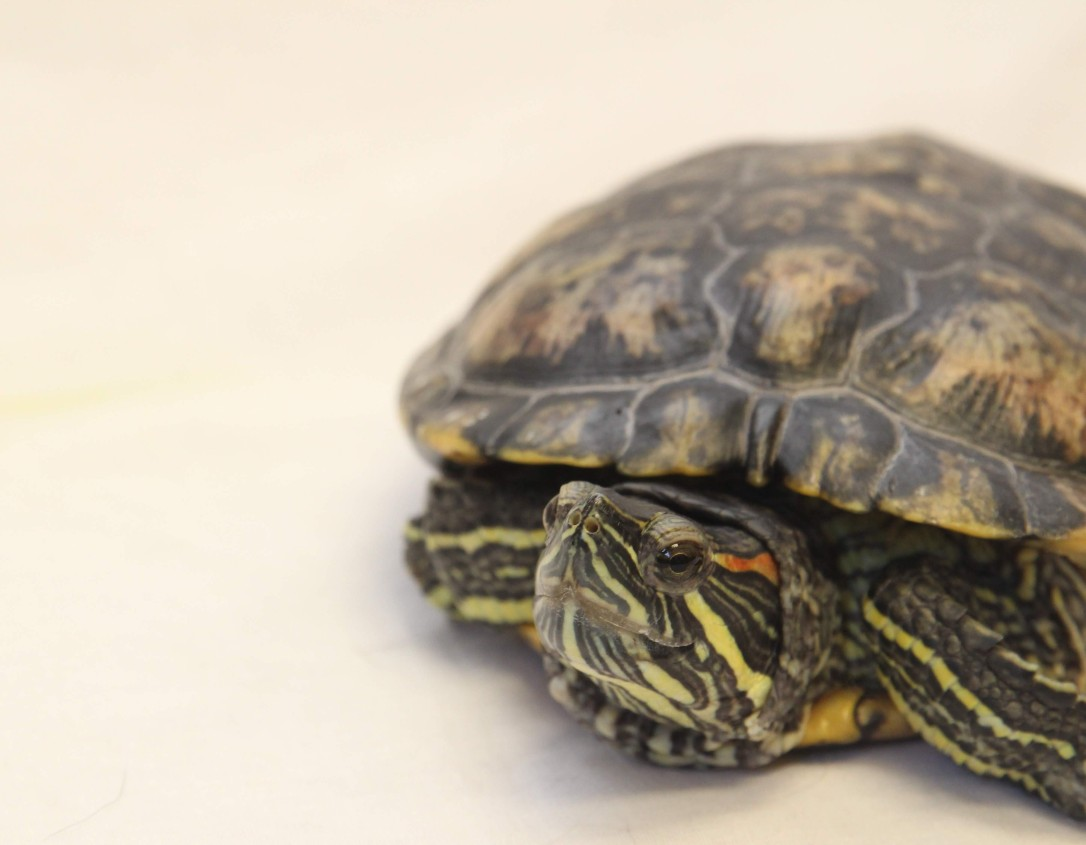 hilliard_employee-pet_hendricks_turtle_exotics_heather-villa-32