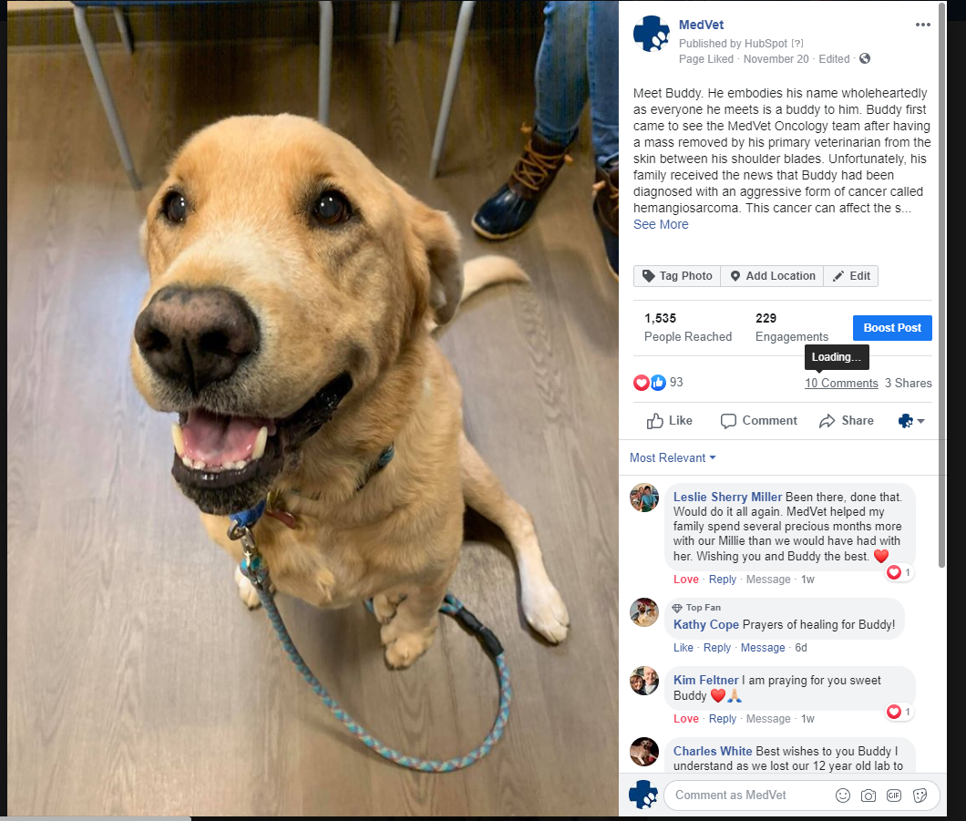 buddy facebook medvet