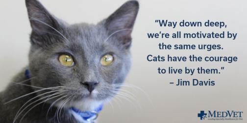 cats inspire