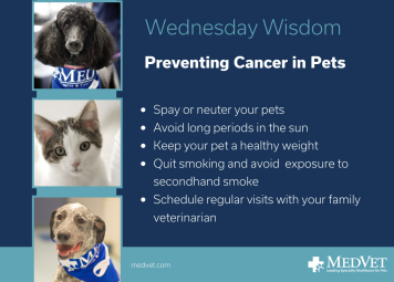 November Social November Social 100% 10 There are steps you can take to lower your pet's risk of developing cancer. Always spay or neuter your pets, limit their sun exposure, keep them at a healthy weight, avoid secondhand smoke, and most importantly, schedule annual wellness check-ups for your pet with your family veterinarian. Screen reader support enabled. There are steps you can take to lower your pet's risk of developing cancer. Always spay or neuter your pets, limit their sun exposure, keep them at a healthy weight, avoid secondhand smoke, and most importantly, schedule annual wellness check-ups for your pet with your family veterinarian.