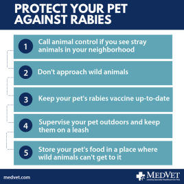 protect your pet against rabies