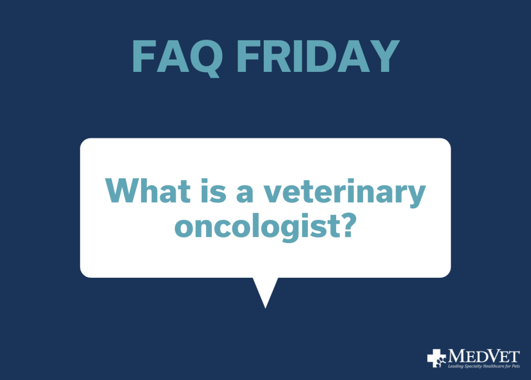 What is a veterinary oncologist