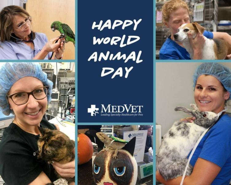 world animal day facebook