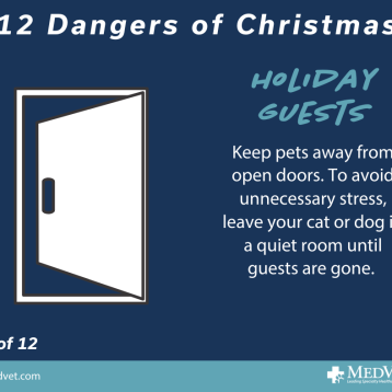 12 Dangers of Christmas 1