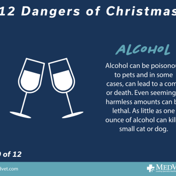 12 Dangers of Christmas 10