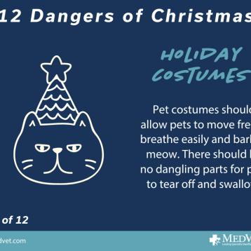 12 Dangers of Christmas 11_2.0