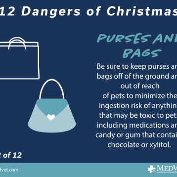 12 Dangers of Christmas 12_2.0