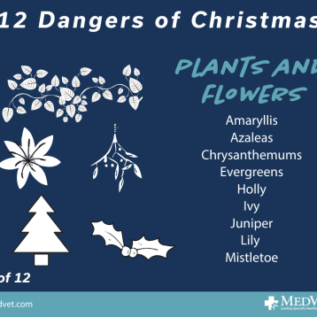 12 Dangers of Christmas 3