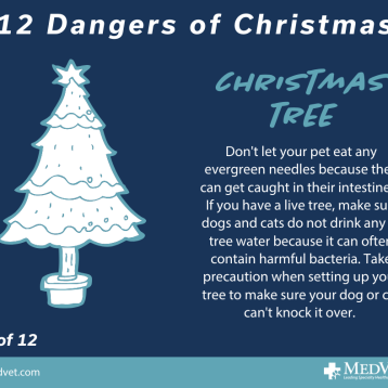 12 Dangers of Christmas 6_2.0 (1)