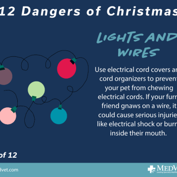 12 Dangers of Christmas 7_2.0